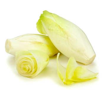 Les endives de Laguiole - Chicory from Laguiole (France)