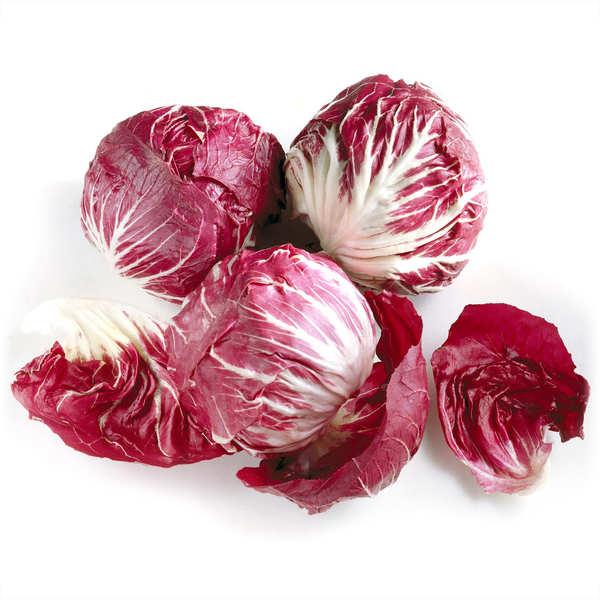 Organic Radicchio from France
