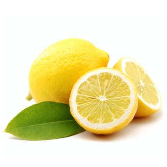 - Citrons primofiore de Sicile bio