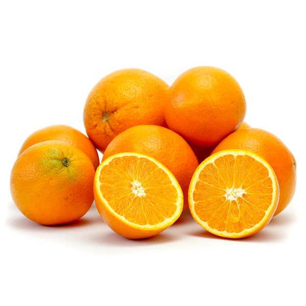 Organic 'Vanilla' Oranges from Sicily
