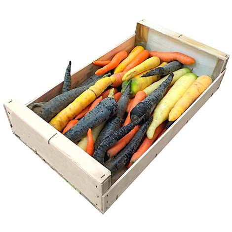 - Carottes bio - trois couleurs