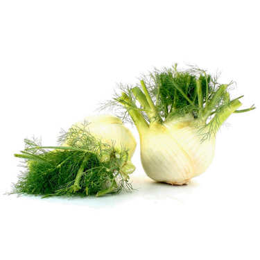 Organic Fennel from France