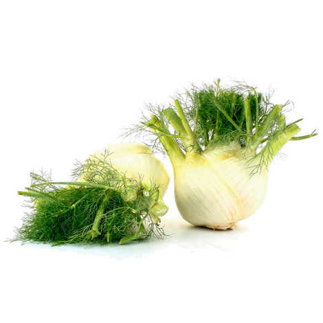 - Organic Fennel from Italy
