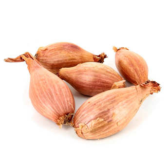 - Organic Fresh Shallot from France