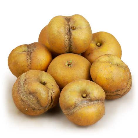 - Organic Apples 'Patte de Loup' from Frnace
