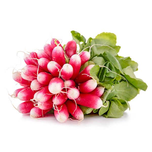 Radis rose de France bio