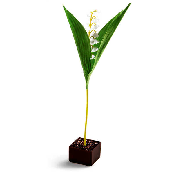 Chocolate Lily of the Valley Flowerpot