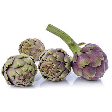 Artichaut violet de France bio