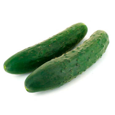 Organic Short Cucumber from France