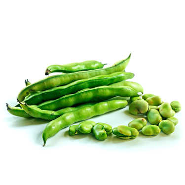 Broad Bean from France