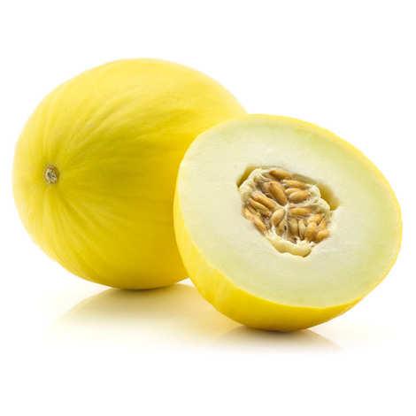 - Melon jaune canari bio