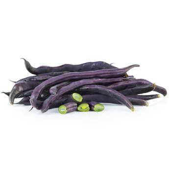 - Haricots violets bio