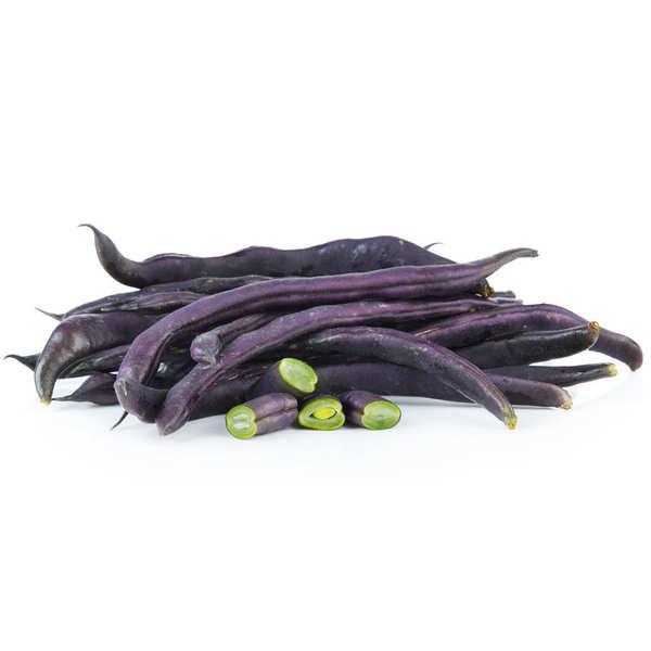 Haricots violets bio
