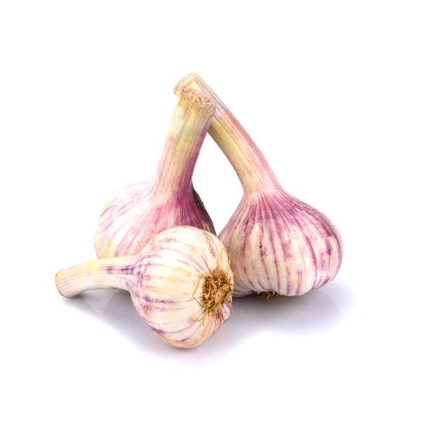 Organic Fresh Purple Garlic from France