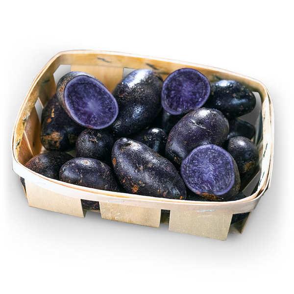 Pomme de terre de France bio - variété Bleu d'Artois