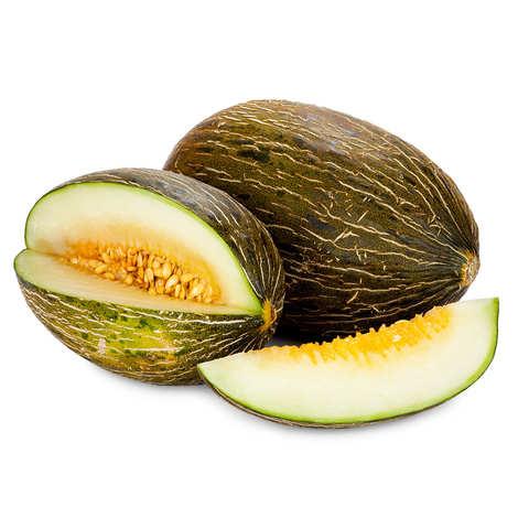 - Organic 'Piel de Sapo' Melon