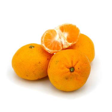Mandarines Satsuma bio d'Italie