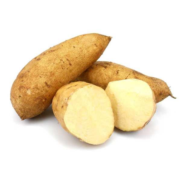 Patate douce blanche bio