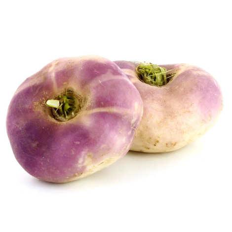 - Navet violet de France bio