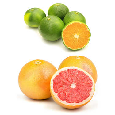 Duo de mandarines et pomelos bio