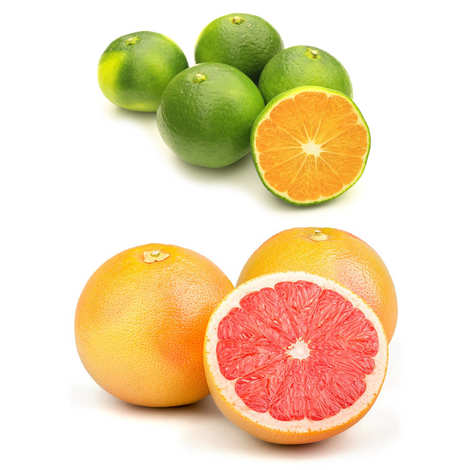 - Duo de mandarines et pomelos bio