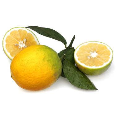 Bergamote Orange from France