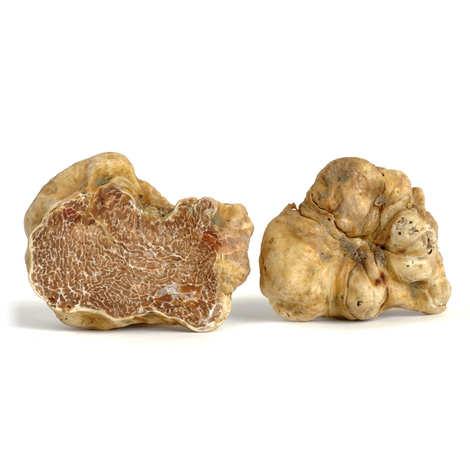 Trufficulteurs d'Alba - Truffes blanches d'Alba fraîches (Tuber Magnatum Pico)
