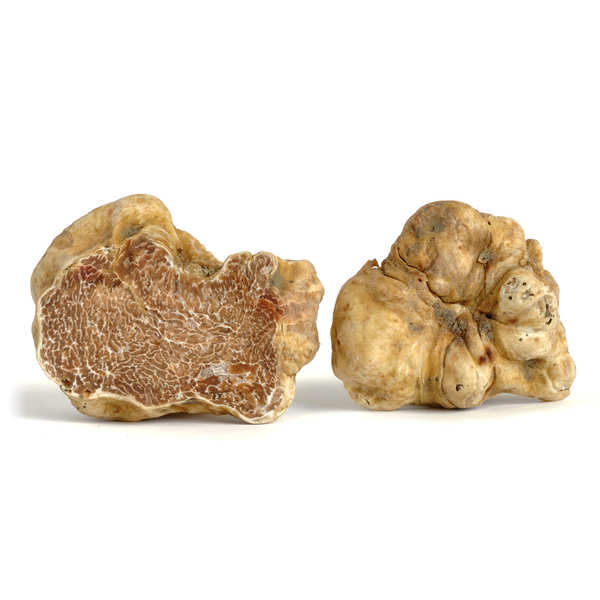 Truffes blanches d'Alba fraîches (Tuber Magnatum Pico)