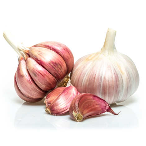- Organic Purple Garlic