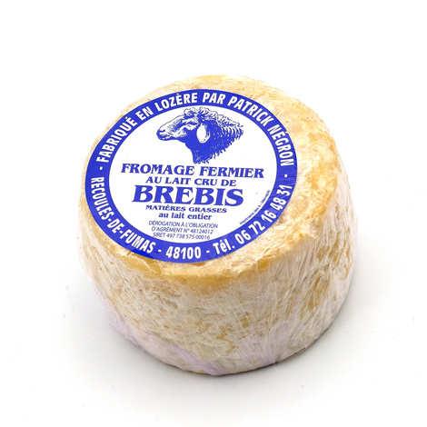 Patrick Negron - Fromage fermier au lait cru de brebis de Lozère