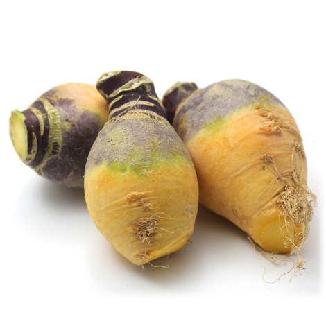 - Organic Rutabaga from France