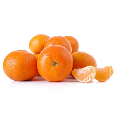 BioKarpos - Organic clementine - 4 gauge