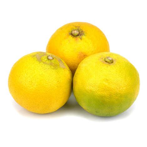 Azienda Agricola Patea - Limonade à la bergamote italienne BergaDrink