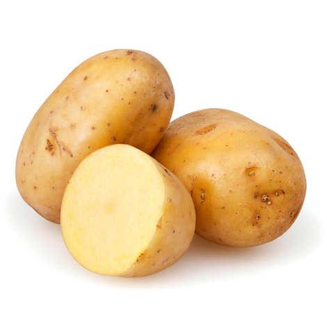 - Pomme de terre de France variété Maiwenn bio
