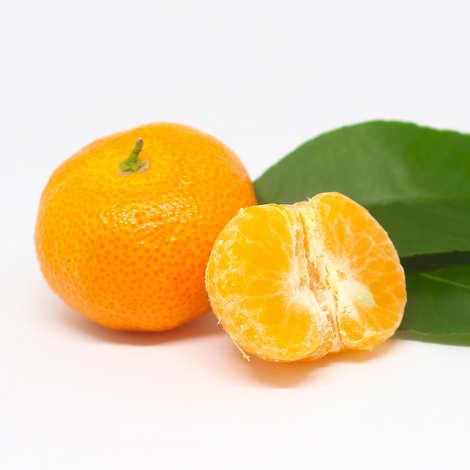 - Mandarine Nadorcott bio