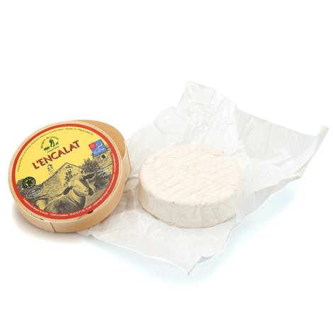 Les Bergers du Larzac - L'Encalat - creamy sheep's milk cheese