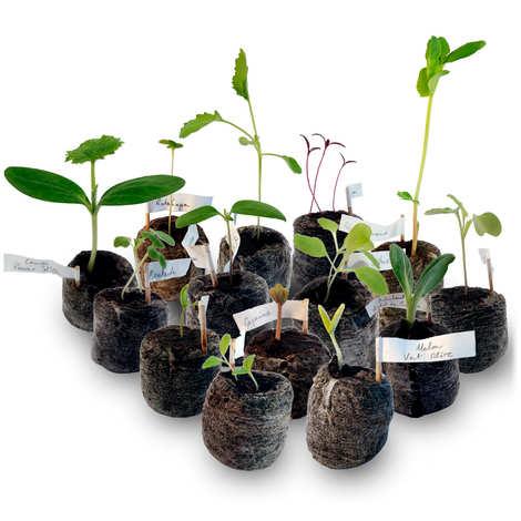 Natacha & Dominique - Calendrier de l'avent graines de variétés anciennes à faire pousser