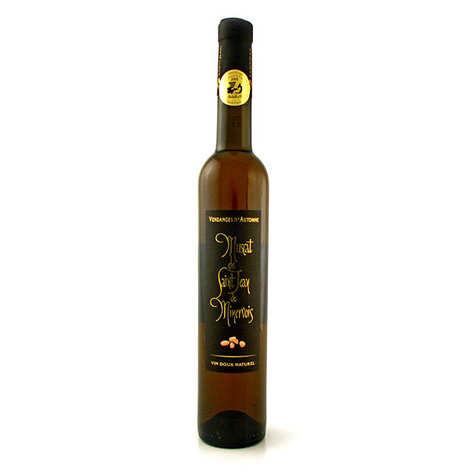 Muscat St Jean de Minervois - French sweet wine from St Jean de Minervois - vendanges d'Automne