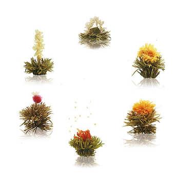 Creano - 6 white tea flowers box